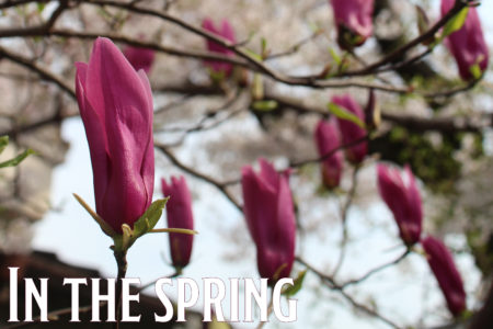 In the spring #03